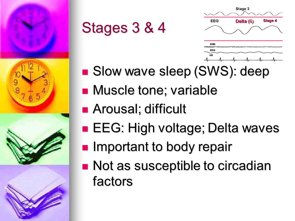 Stages 3 & 4 Slow wave sleep (SWS): deep Muscle tone; variable
