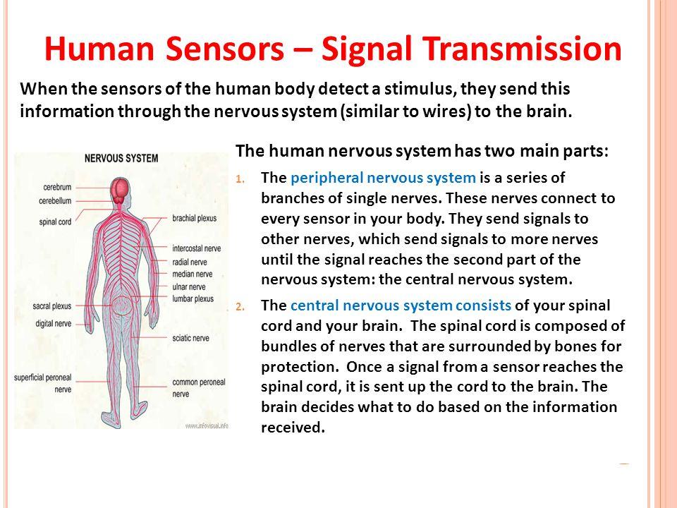 Human Sensors – Signal Transmission