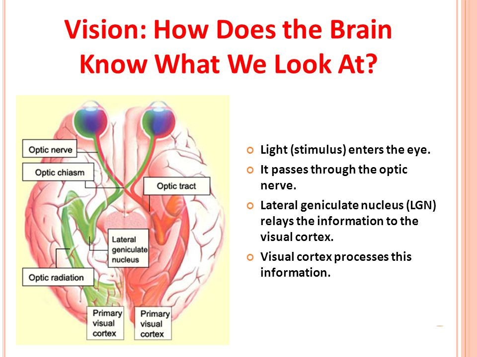 Vision: How Does the Brain Know What We Look At