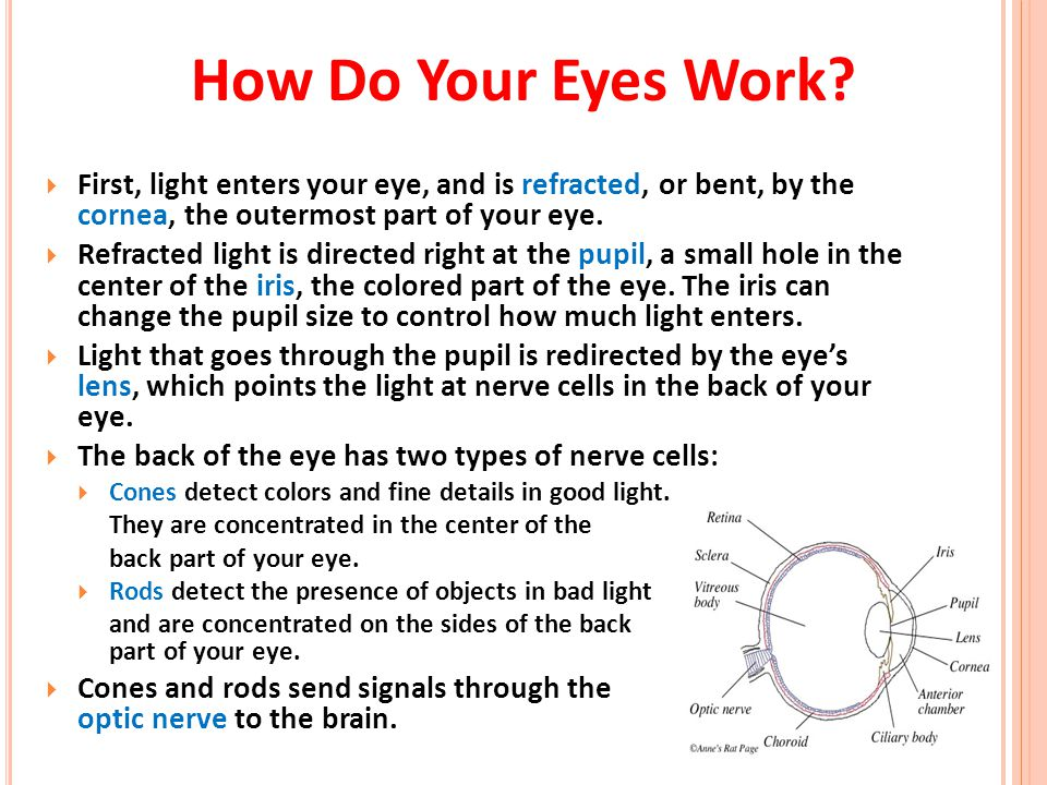 How Do Your Eyes Work First, light enters your eye, and is refracted, or bent, by the cornea, the outermost part of your eye.