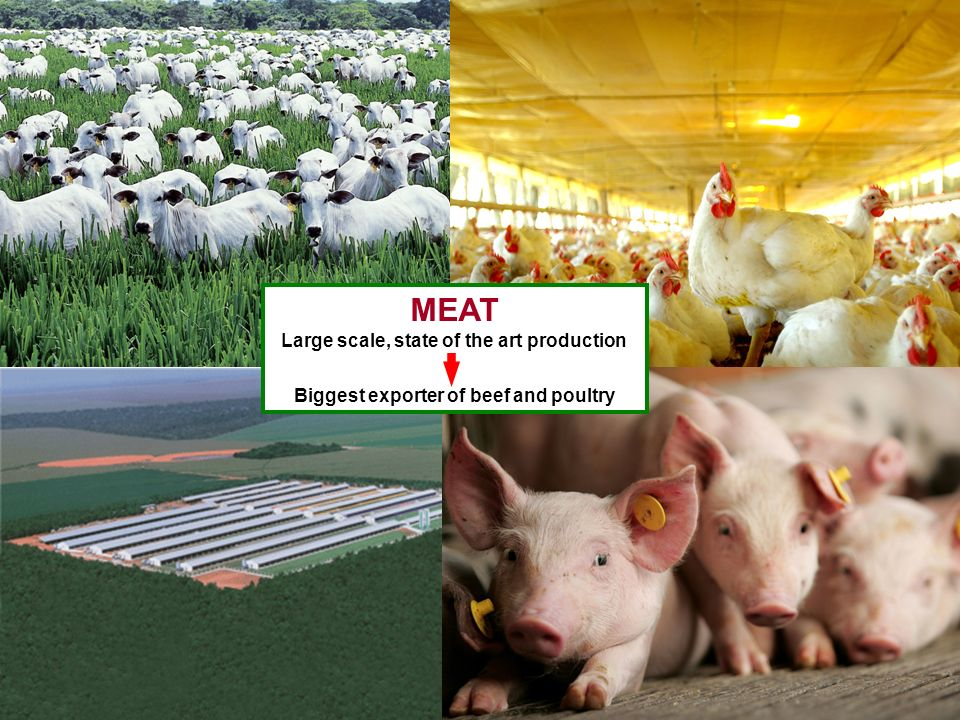 MEAT Large scale, state of the art production