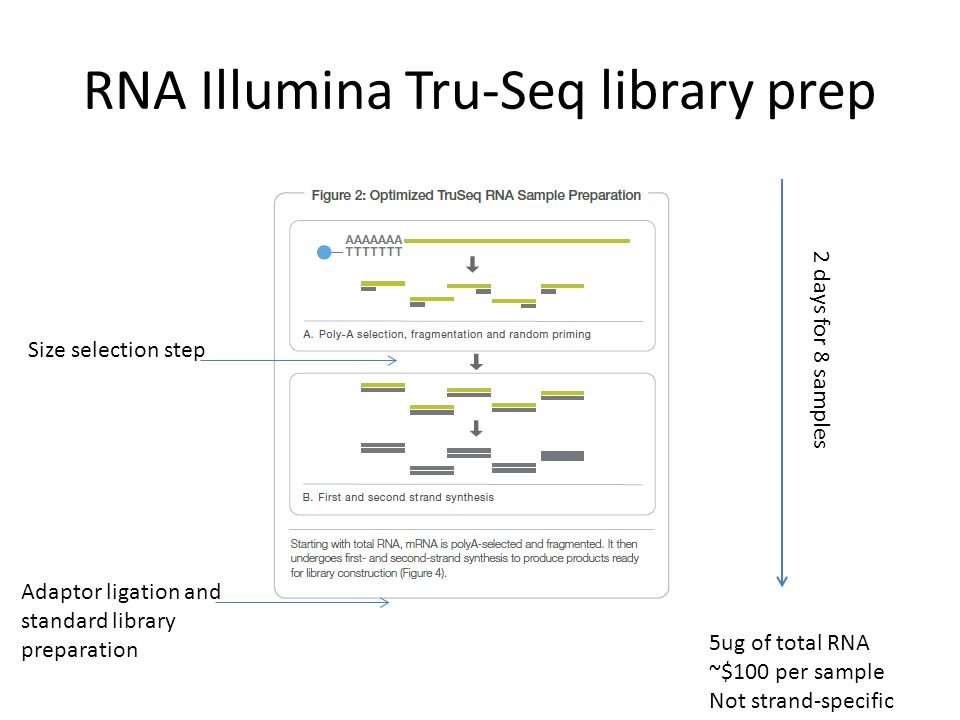 RNA Illumina Tru-Seq library prep