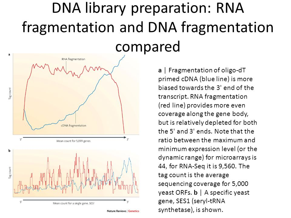 DNA library preparation: RNA fragmentation and DNA fragmentation compared