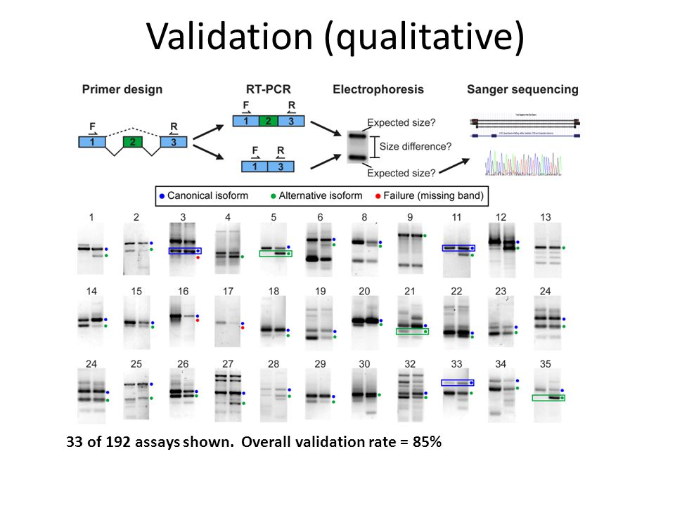 Validation (qualitative)