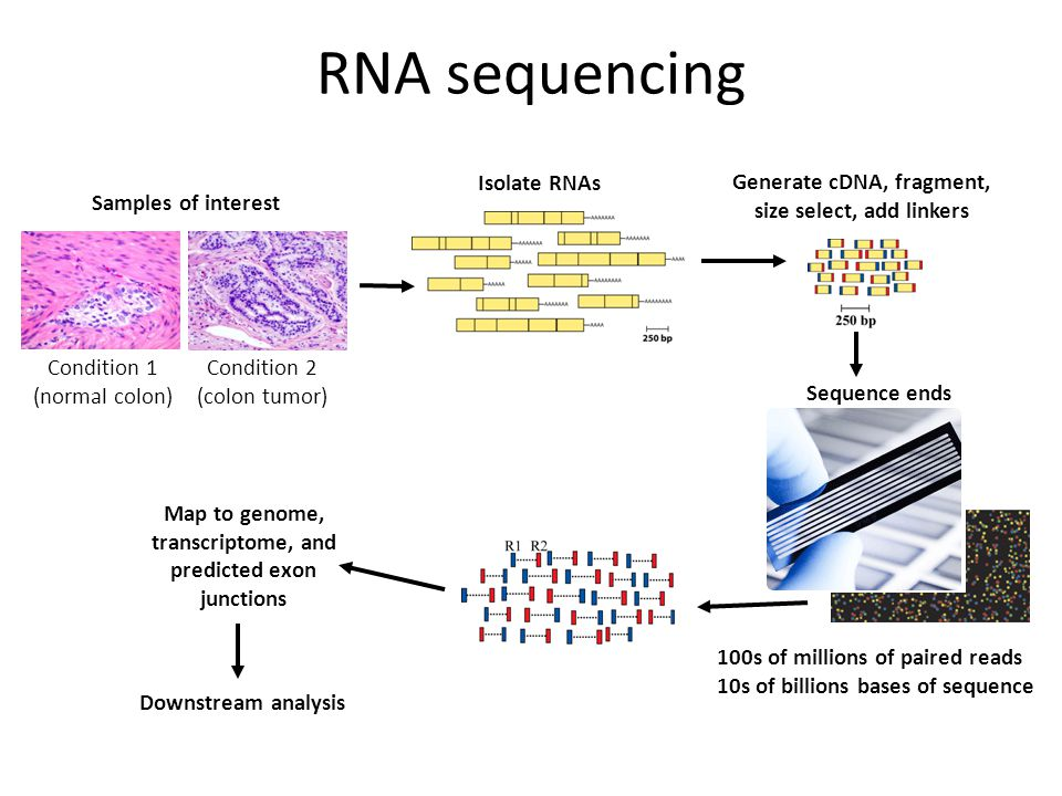 RNA sequencing Isolate RNAs
