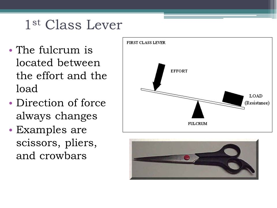 1st Class Lever The fulcrum is located between the effort and the load