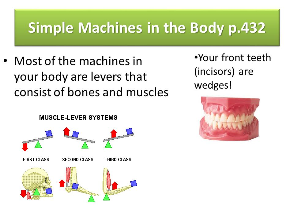 Simple Machines in the Body p.432