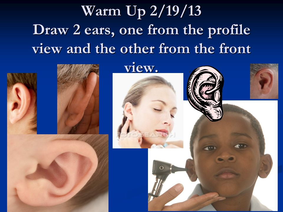 Warm Up 2/19/13 Draw 2 ears, one from the profile view and the other from the front view.