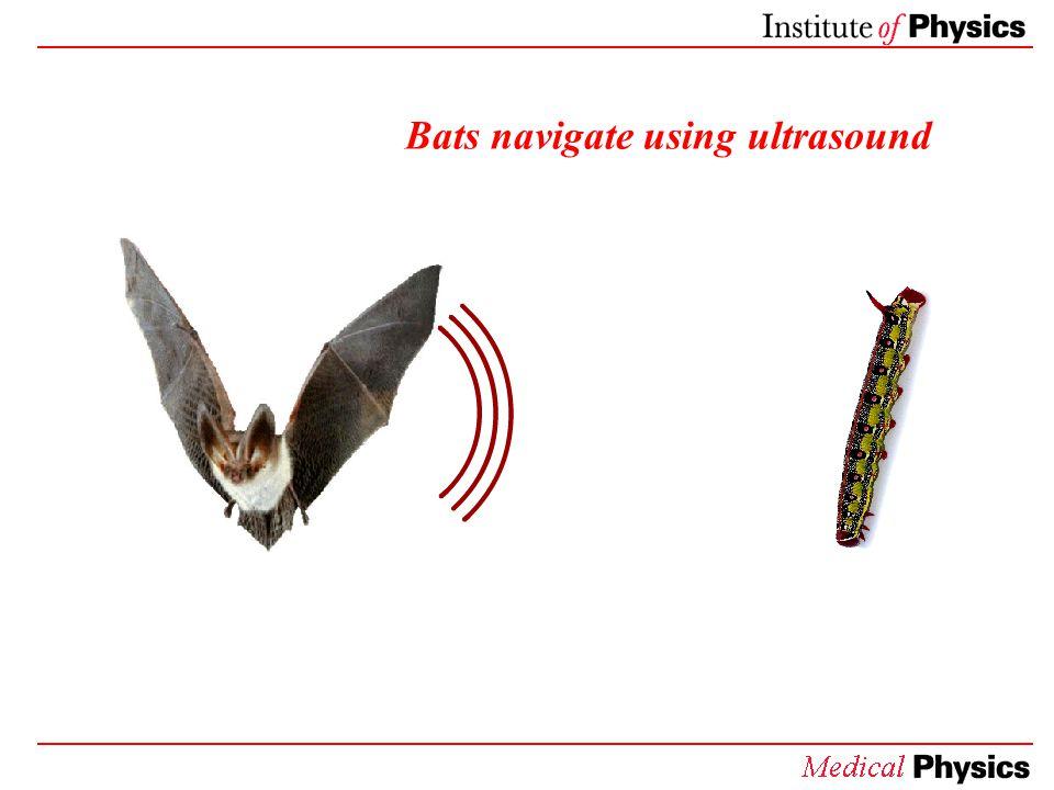 Bats navigate using ultrasound