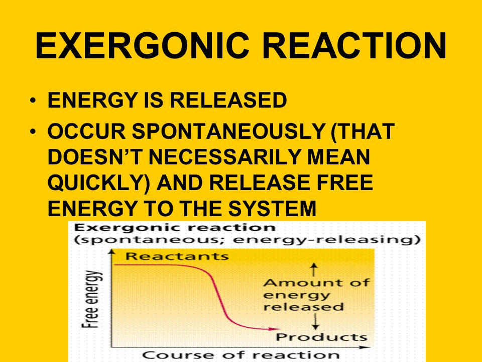 EXERGONIC REACTION ENERGY IS RELEASED