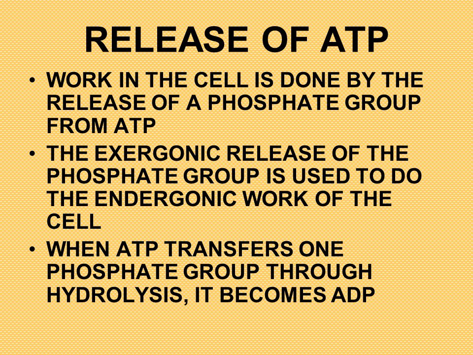 RELEASE OF ATP WORK IN THE CELL IS DONE BY THE RELEASE OF A PHOSPHATE GROUP FROM ATP.