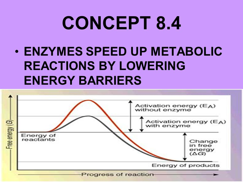 CONCEPT 8.4 ENZYMES SPEED UP METABOLIC REACTIONS BY LOWERING ENERGY BARRIERS