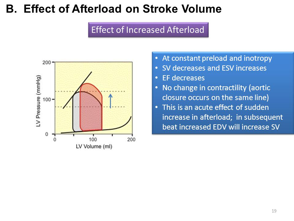 B. Effect of Afterload on Stroke Volume