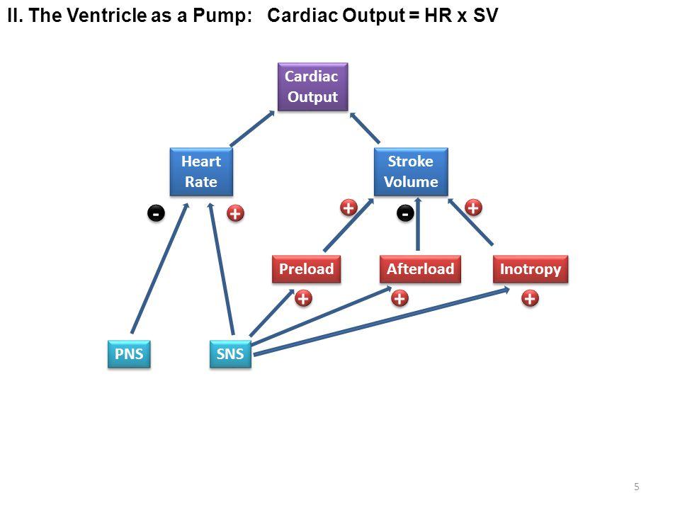 + + - + - + + + II. The Ventricle as a Pump: Cardiac Output = HR x SV