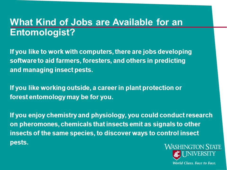 What Kind of Jobs are Available for an Entomologist