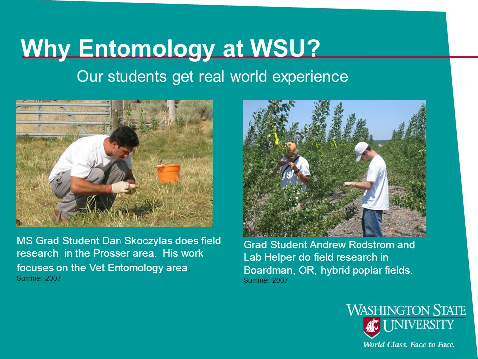 Why Entomology at WSU Our students get real world experience