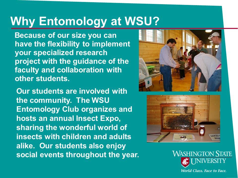 Why Entomology at WSU