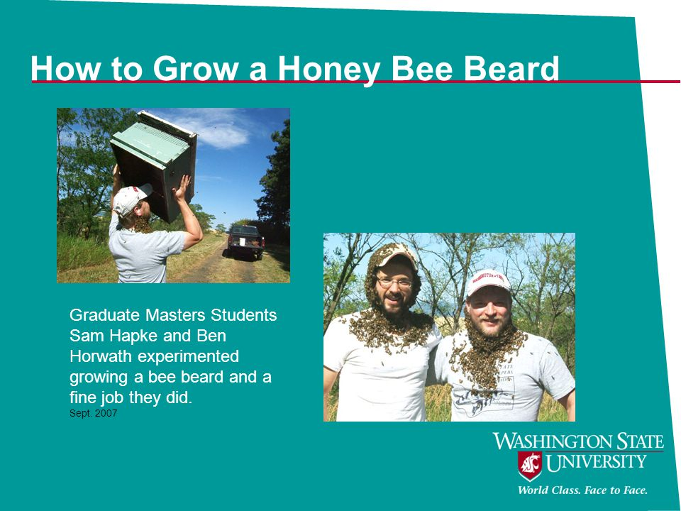 How to Grow a Honey Bee Beard