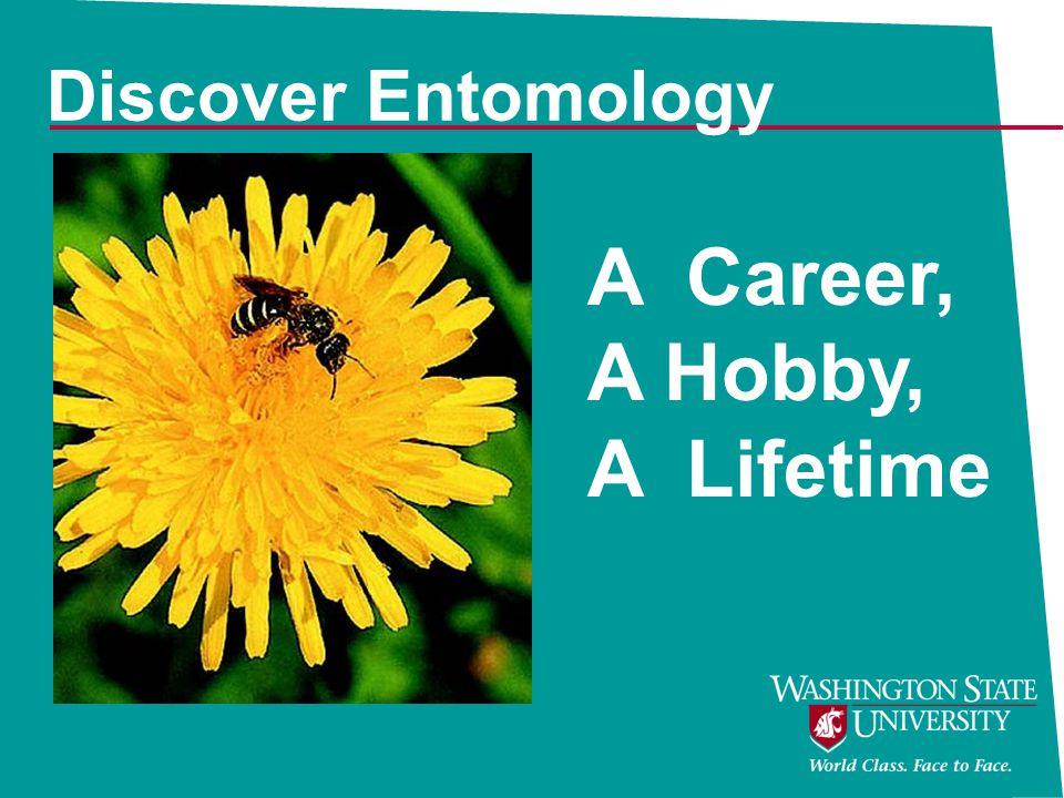 A Career, A Hobby, A Lifetime