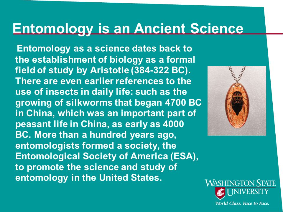 Entomology is an Ancient Science