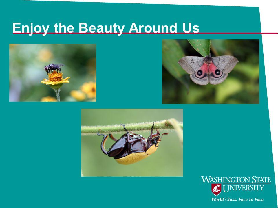 Enjoy the Beauty Around Us