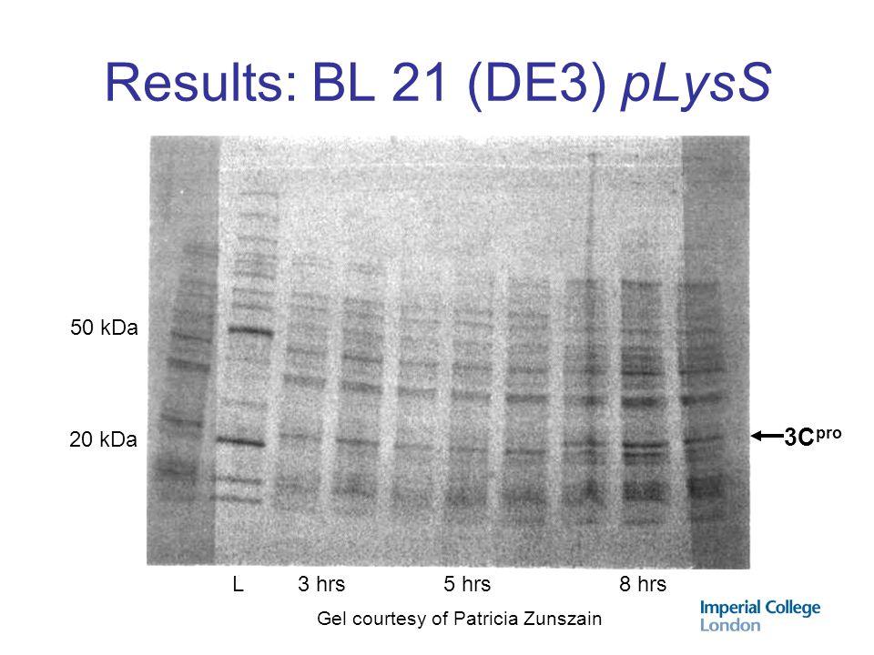 Results: BL 21 (DE3) pLysS 3Cpro 50 kDa 20 kDa L 3 hrs 5 hrs 8 hrs