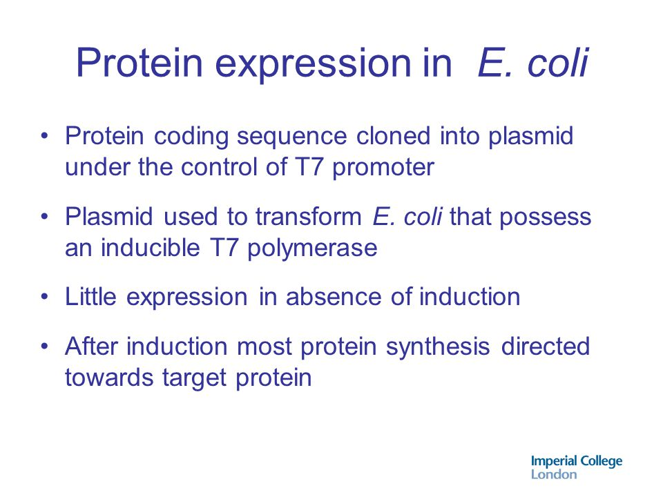 Protein expression in E. coli