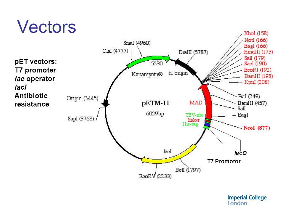Vectors pET vectors: T7 promoter Iac operator lacI Antibiotic