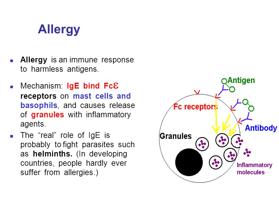 Allergy Allergy is an immune response to harmless antigens.