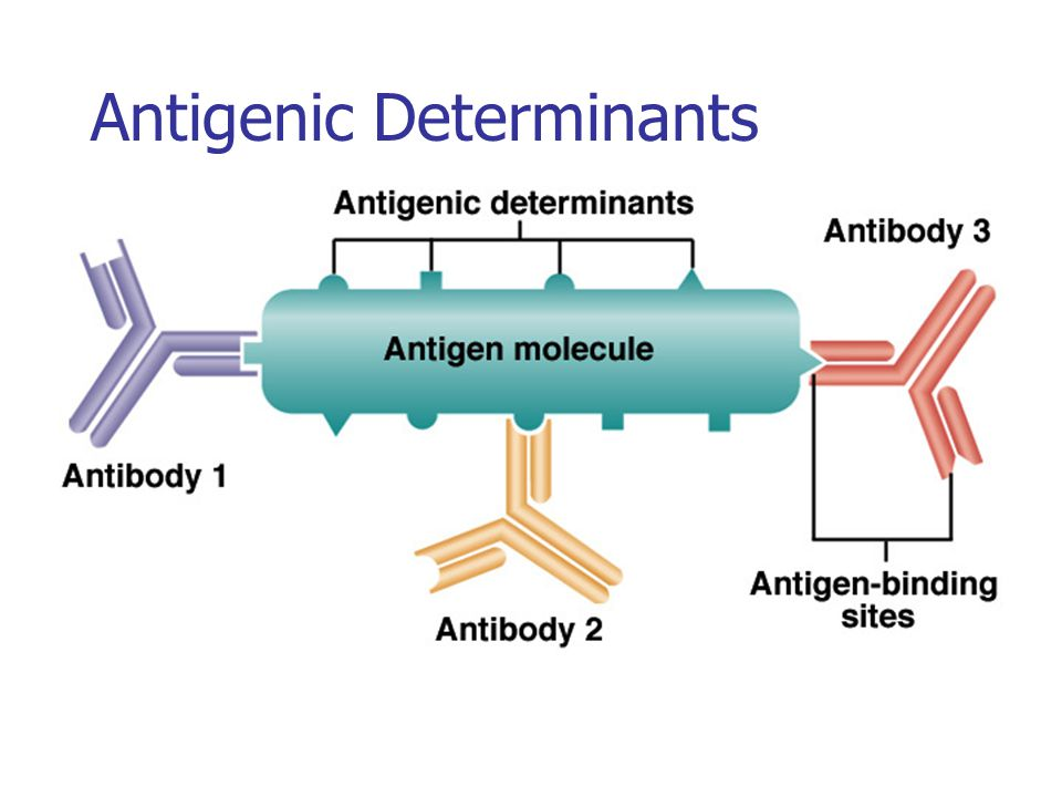 Antigenic Determinants