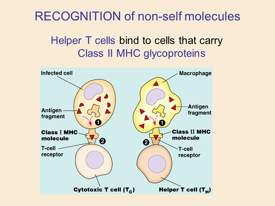 RECOGNITION of non-self molecules