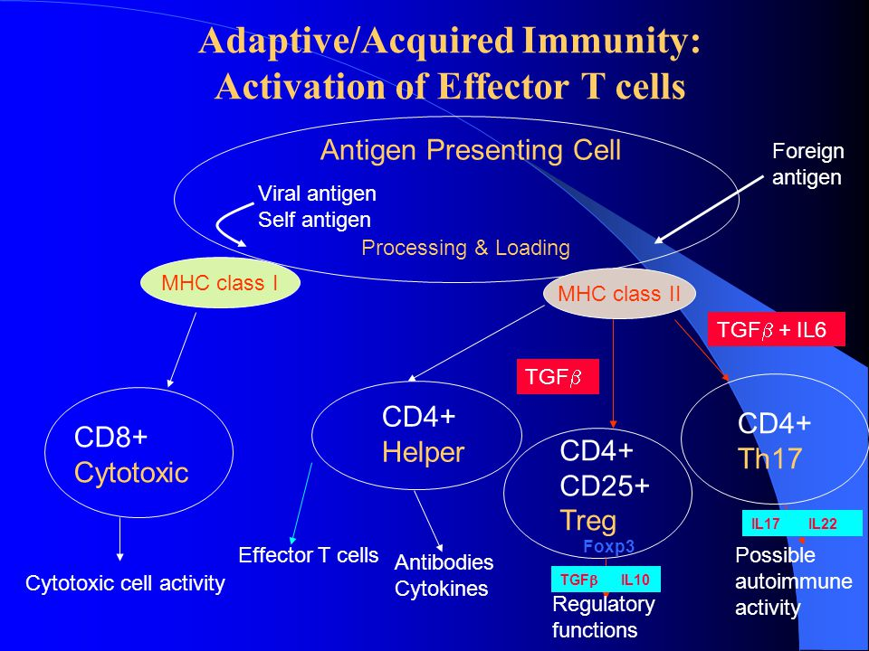 Adaptive/Acquired Immunity: Activation of Effector T cells