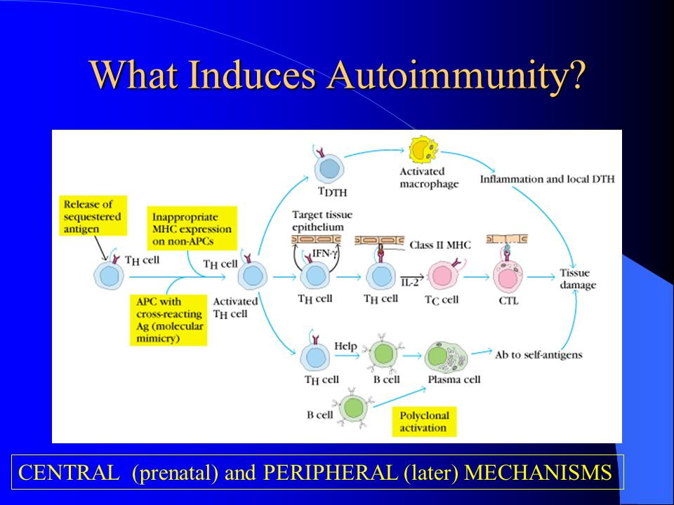 What Induces Autoimmunity