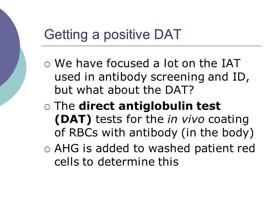 Getting a positive DAT We have focused a lot on the IAT used in antibody screening and ID, but what about the DAT