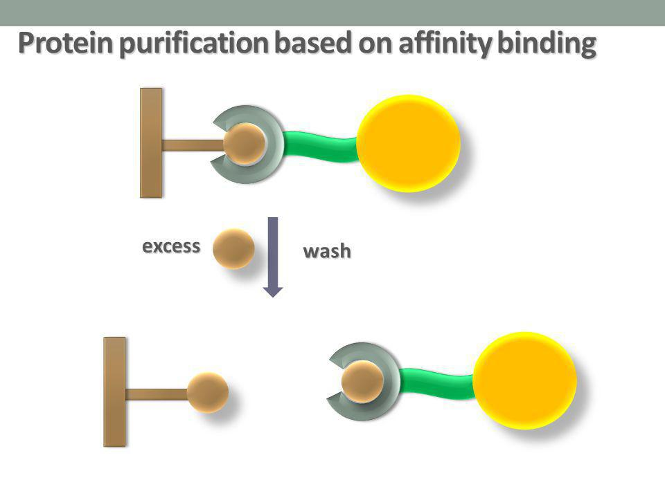 Protein purification based on affinity binding