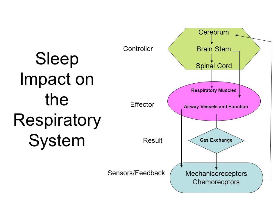 Sleep Impact on the Respiratory System