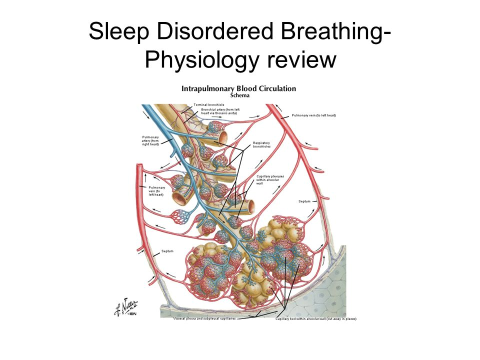 Sleep Disordered Breathing- Physiology review