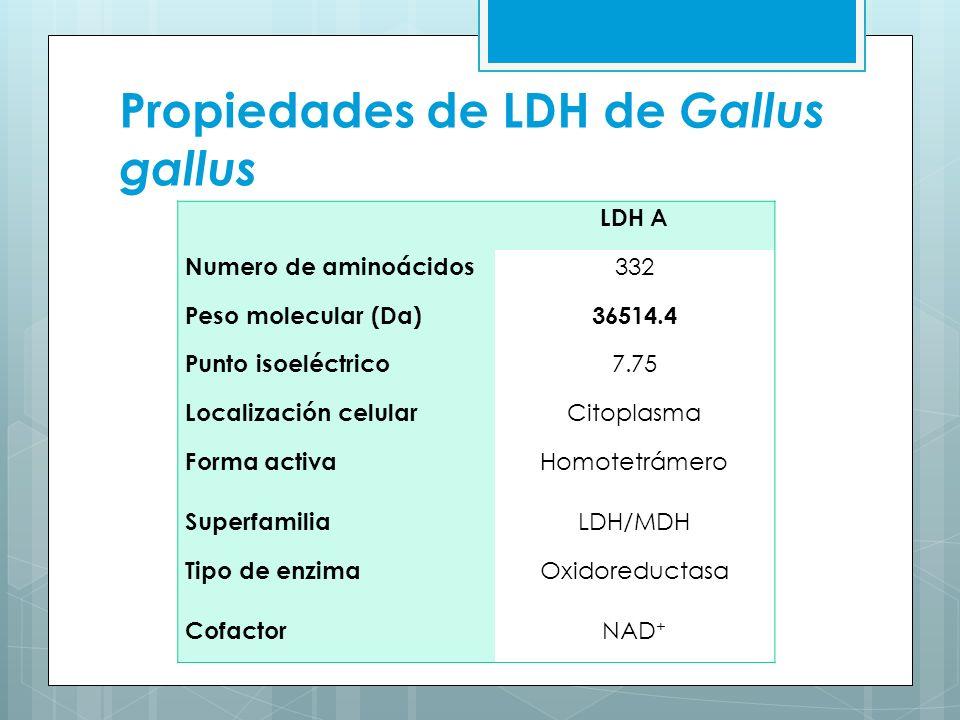 Propiedades de LDH de Gallus gallus
