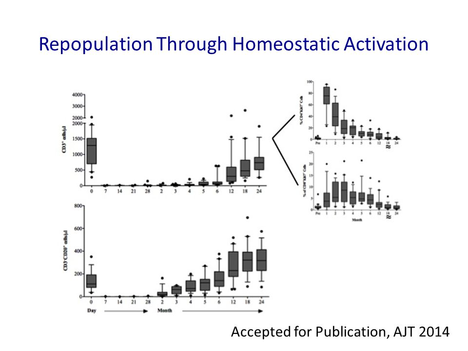 Repopulation Through Homeostatic Activation
