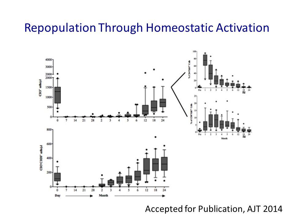 Repopulation Through Homeostatic Activation