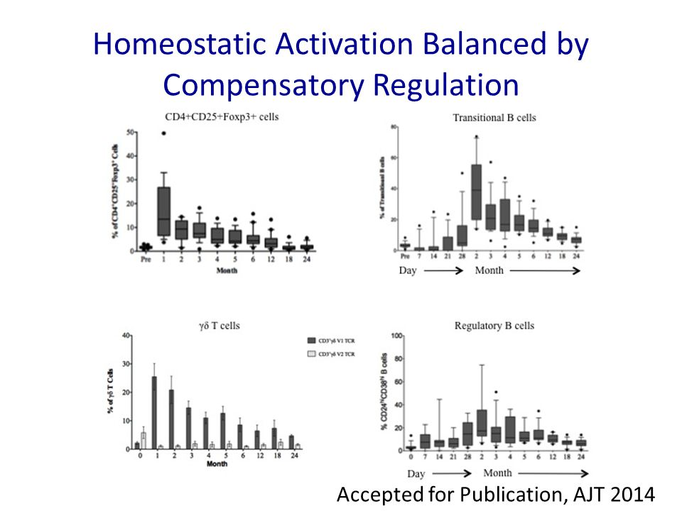 Homeostatic Activation Balanced by Compensatory Regulation