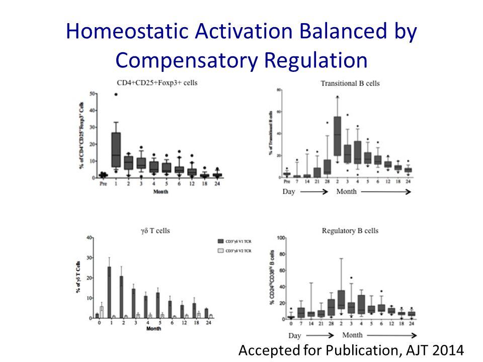 Homeostatic Activation Balanced by Compensatory Regulation