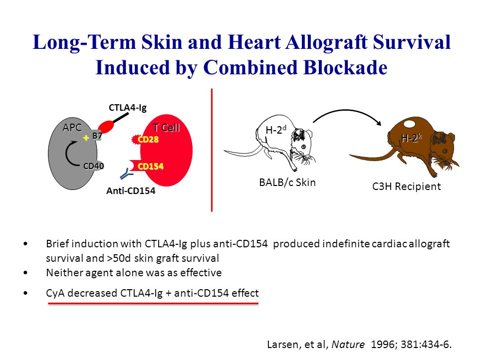 Long-Term Skin and Heart Allograft Survival Induced by Combined Blockade