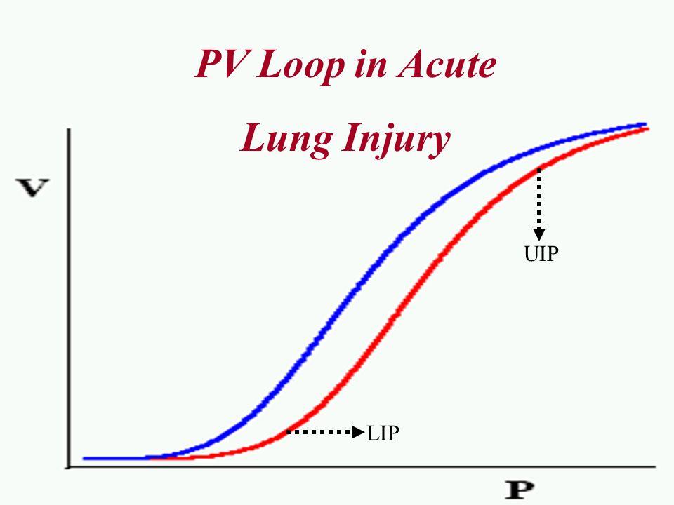 PV Loop in Acute Lung Injury