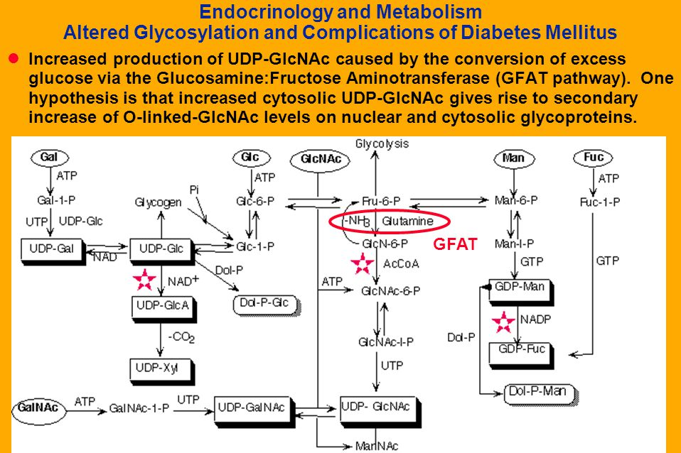 Endocrinology and Metabolism Altered Glycosylation and Complications of Diabetes Mellitus