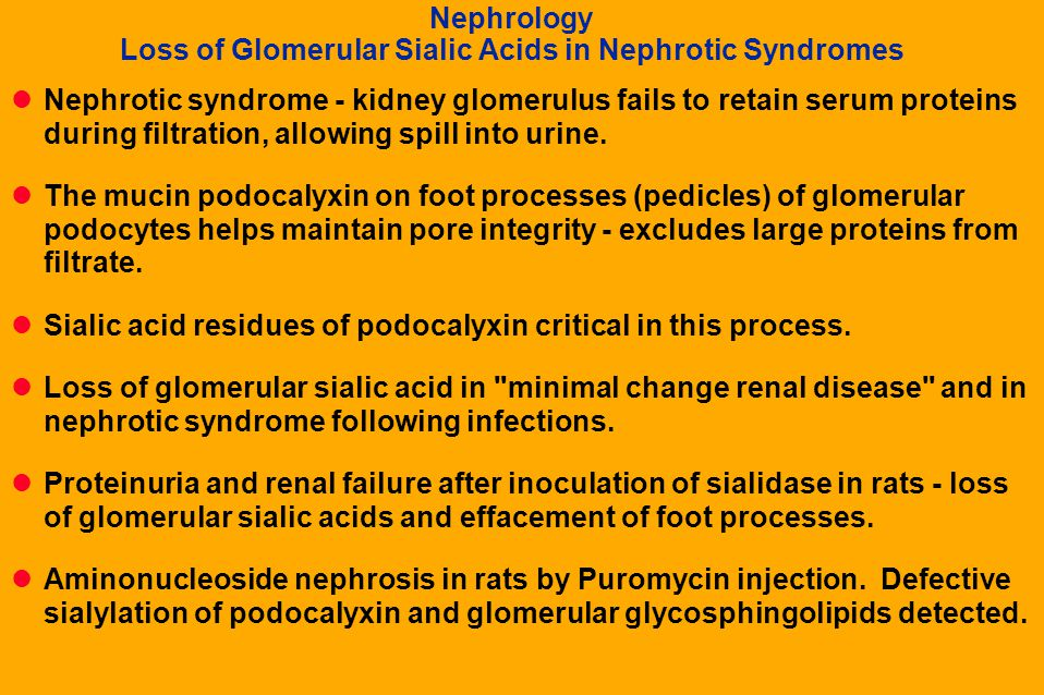 Nephrology Loss of Glomerular Sialic Acids in Nephrotic Syndromes