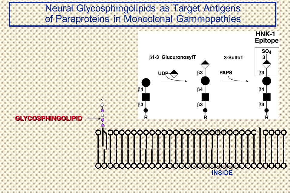 Neural Glycosphingolipids as Target Antigens of Paraproteins in Monoclonal Gammopathies