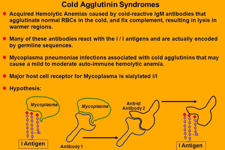 Cold Agglutinin Syndromes