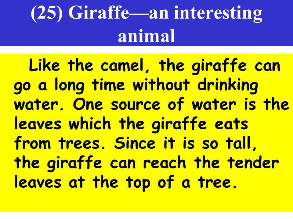 (25) Giraffe—an interesting animal