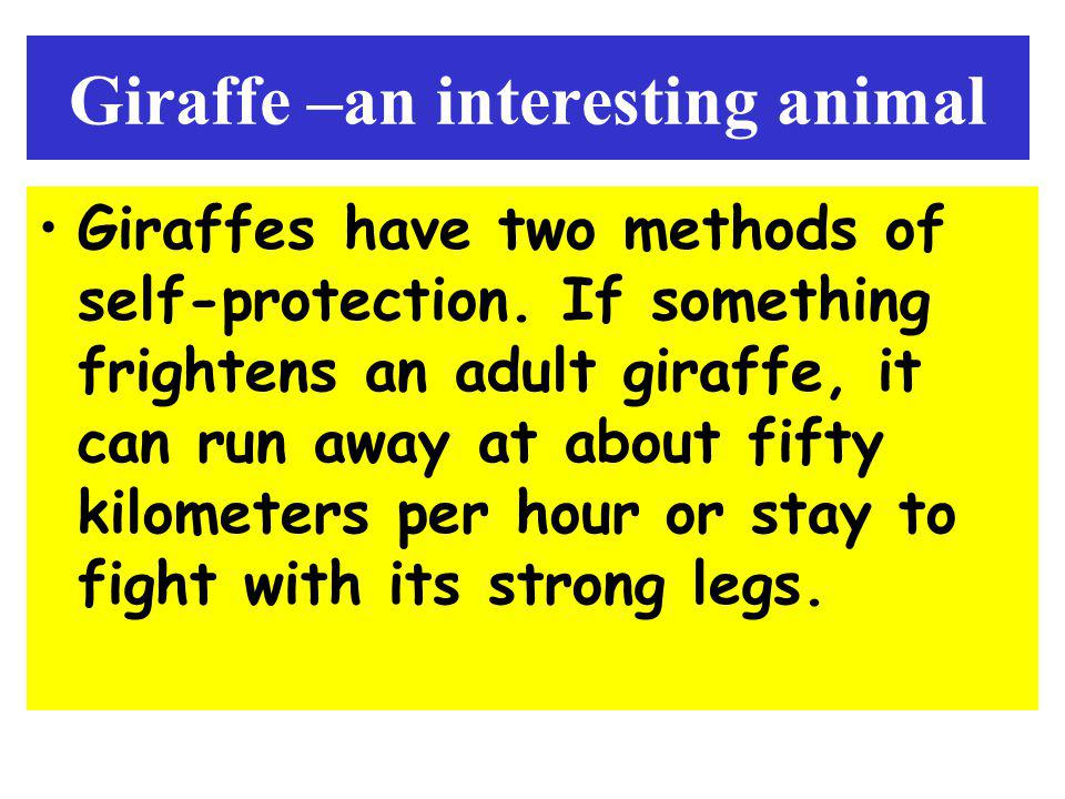 Giraffe –an interesting animal